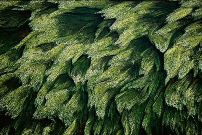 Aerial-Photographs-by-Yann-Arthus-Bertrand-14