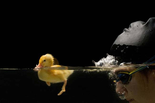 The-Adorable-Friendship-Between-A-Swimmer-And-Her-Duckling-02