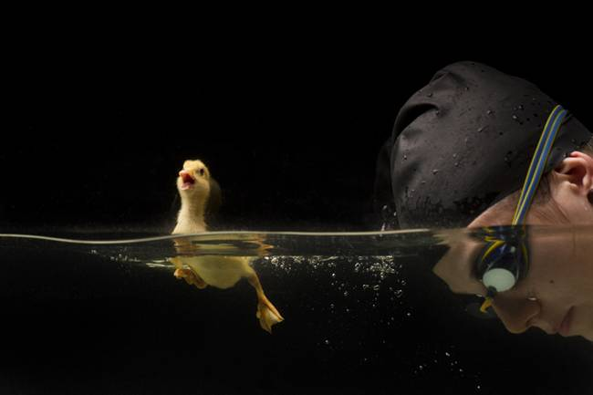 The-Adorable-Friendship-Between-A-Swimmer-And-Her-Duckling-05