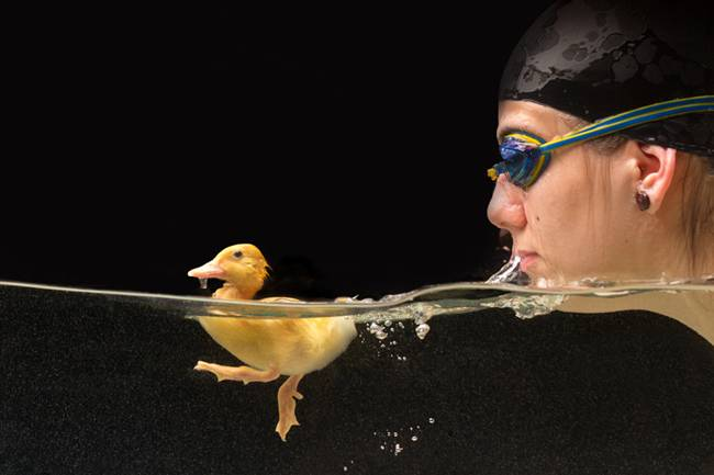 The-Adorable-Friendship-Between-A-Swimmer-And-Her-Duckling-07