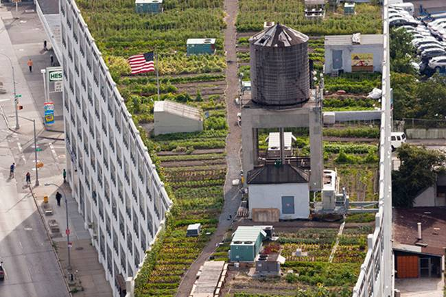 A-farm-on-the-roof-of-a-building-in-New-York-02