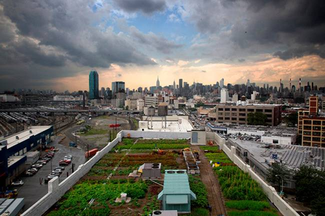 A-farm-on-the-roof-of-a-building-in-New-York-03