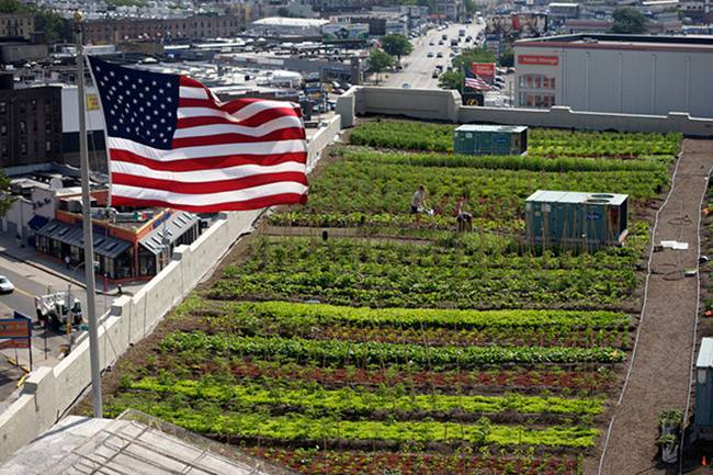 A-farm-on-the-roof-of-a-building-in-New-York-04