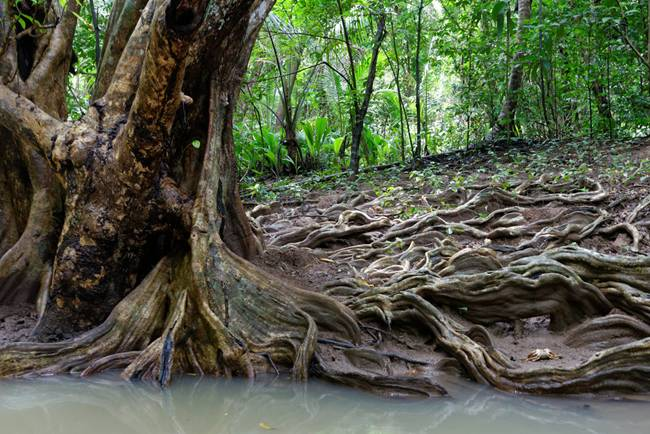 A-Indian-river-in-Dominica-seems-fantasy-05