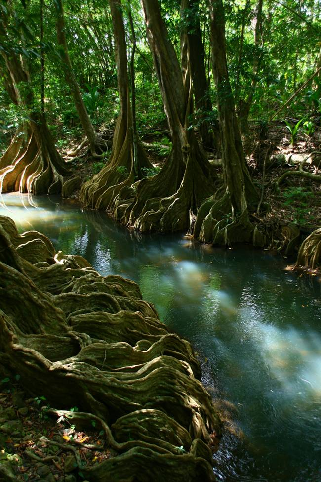 A Indian river in Dominica seems fantasy