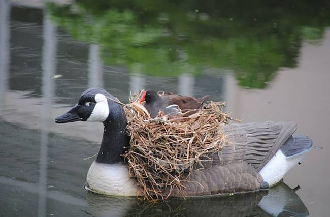 Birds-Nest-at-unusual-places-06