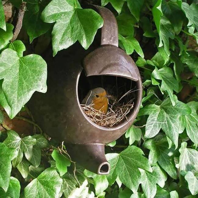 Birds-Nest-at-unusual-places-08
