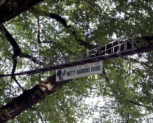Bridge-for-Squirrels-Nutty-Narrows-Bridge-02