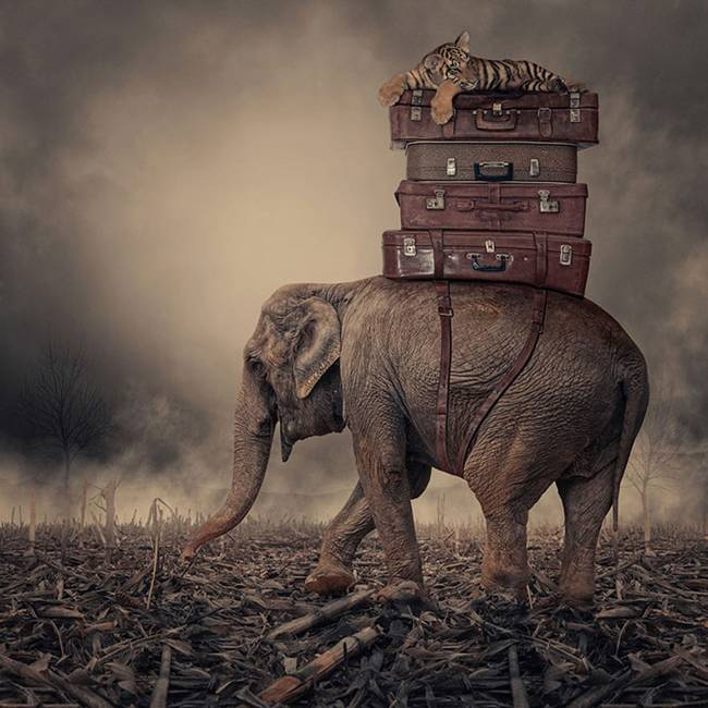 Caras-Ionut-PHOTOMANIPULATIONS-10