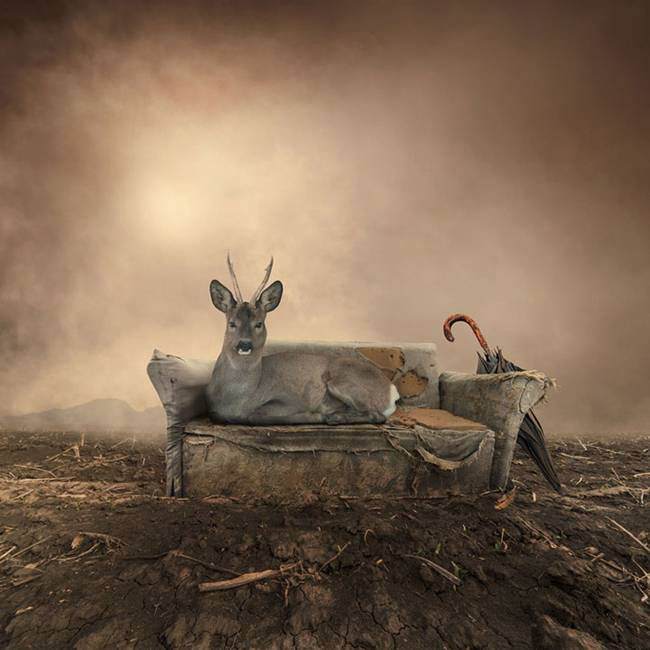 Caras-Ionut-PHOTOMANIPULATIONS-12