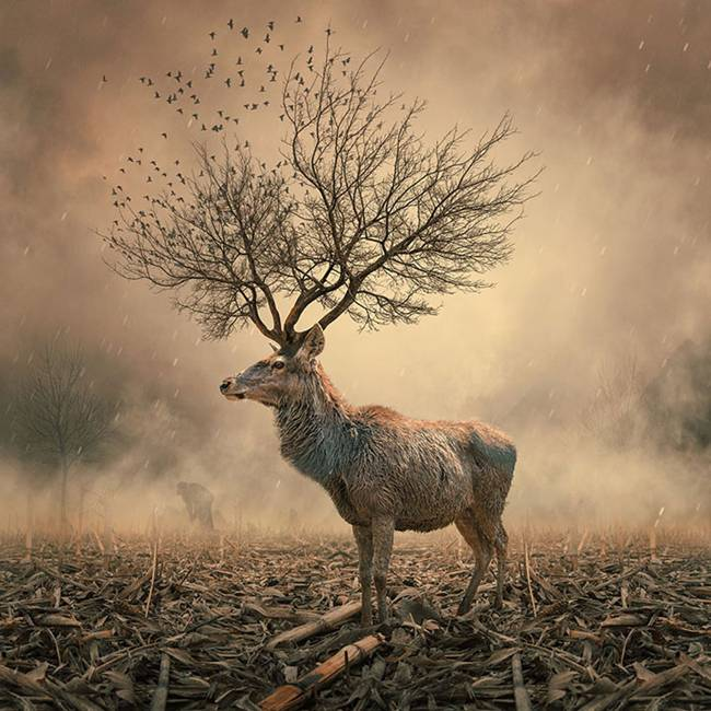 Caras-Ionut-PHOTOMANIPULATIONS-37