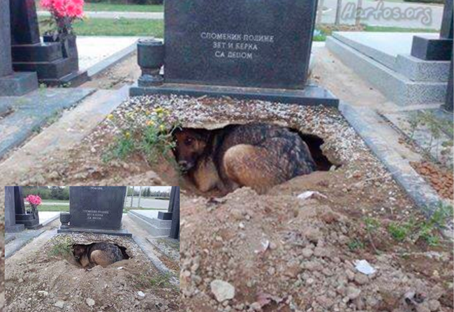 This dog has remained loyal to his master even after his death