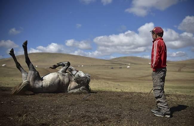 Mongolian Child Jockeys Racing Across The Steppes