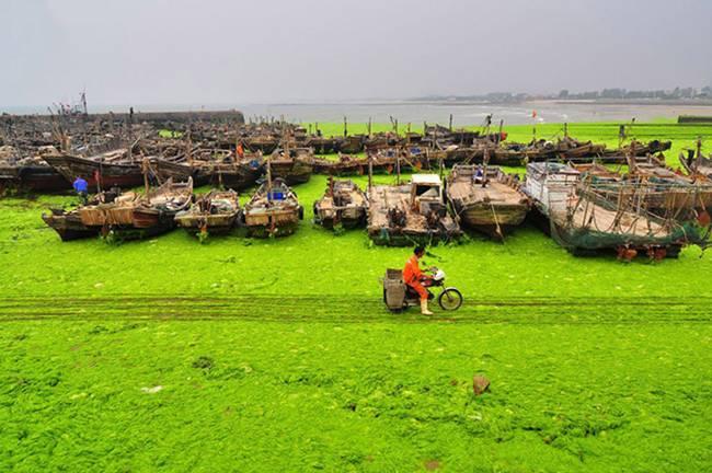 The invasion of green algae