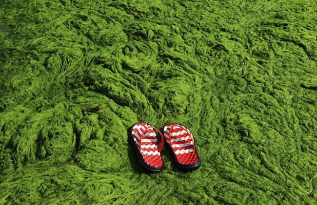 The invasion of green algae
