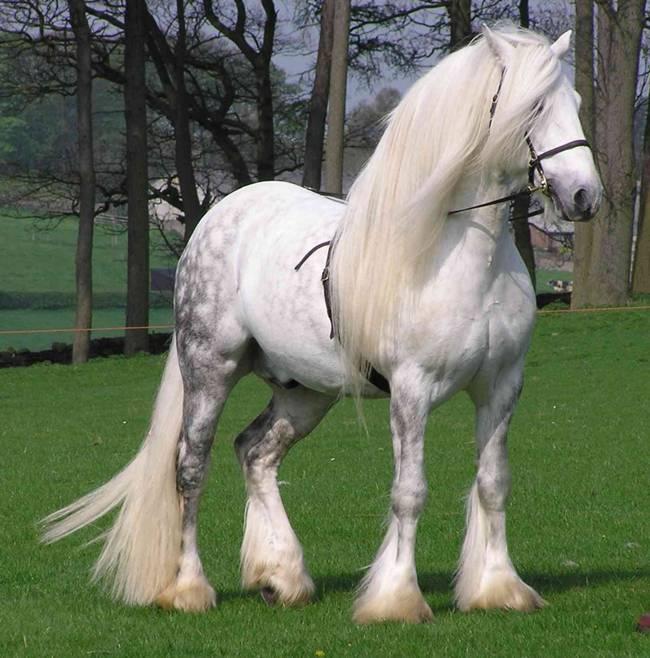 15 Awesome Horses