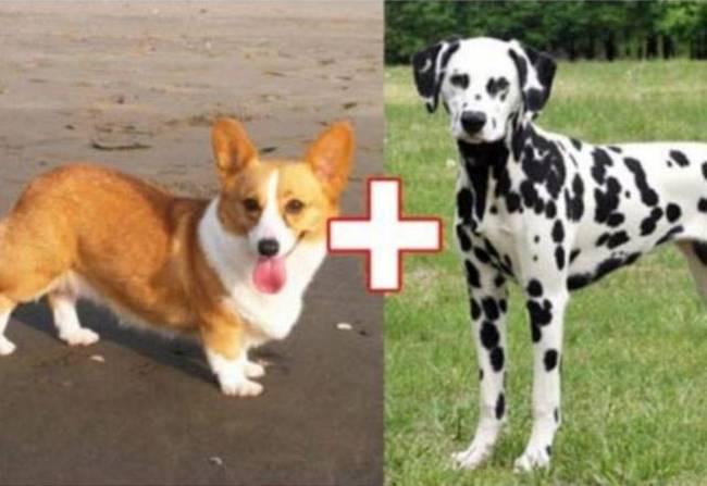 10 Cross Dog Breeds