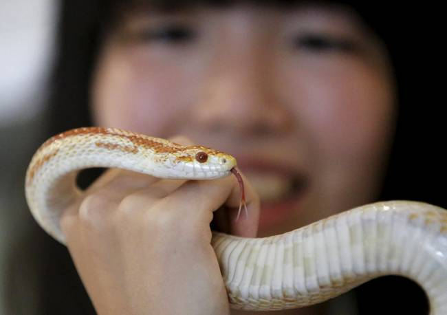 The Snake Cafe in Tokyo
