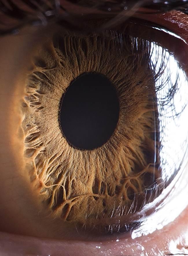 Beautiful Close Ups Human Eye