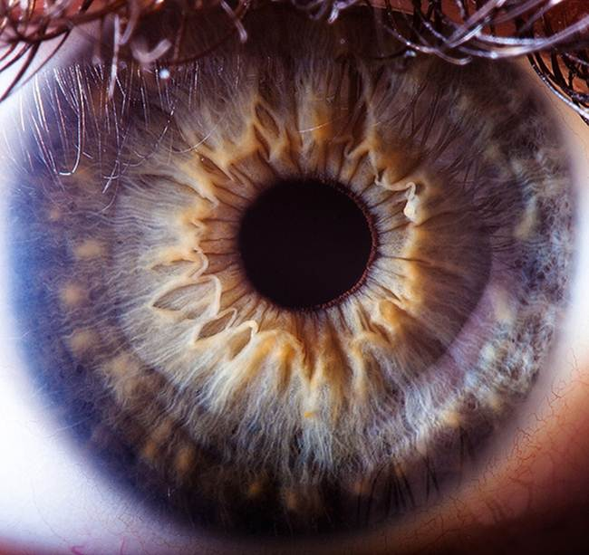 Beautiful Close Ups Human Eye