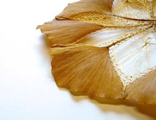 Hillary Fayle Working with freshly fallen Ginkgo leaves