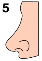 The shape of the nose will tell about your personality