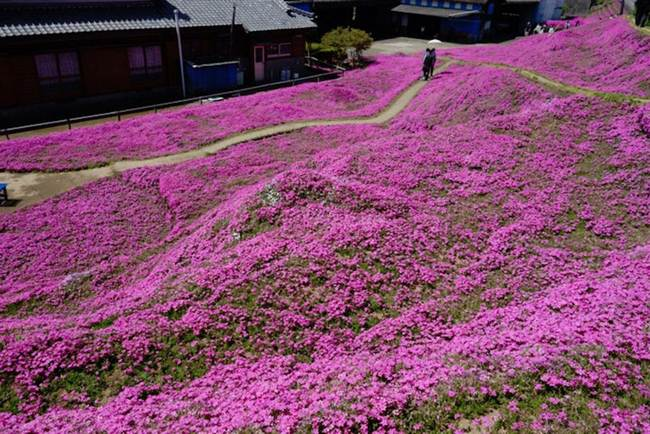Loving husband plant a field of fragrant flowers for his blind wife smile every day