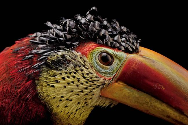 Photo Ark by Joel Sartore