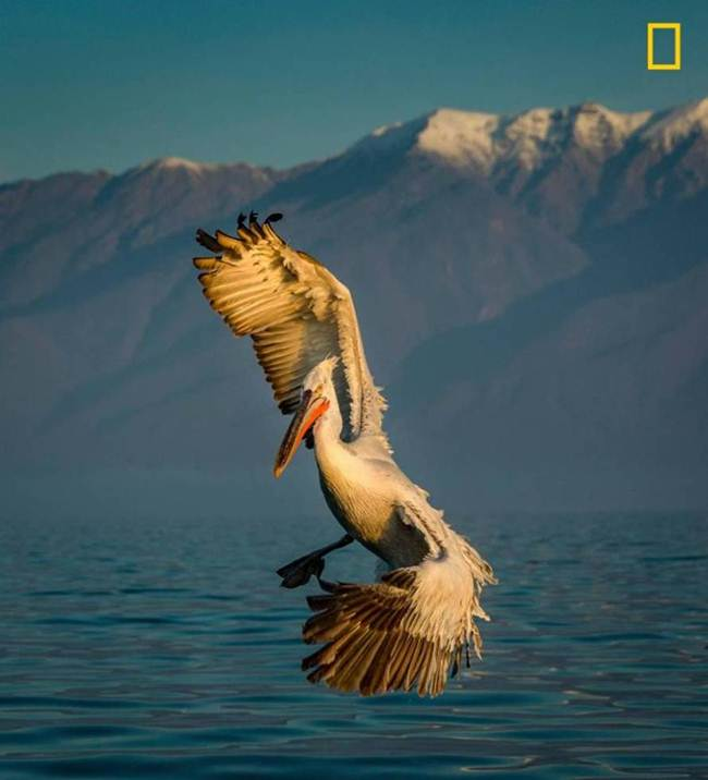 2017 National Geographic Nature Photographer Contest