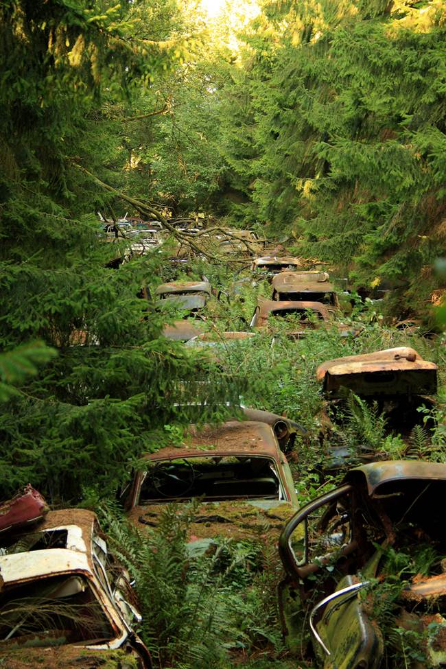 Cars in Belgian forest