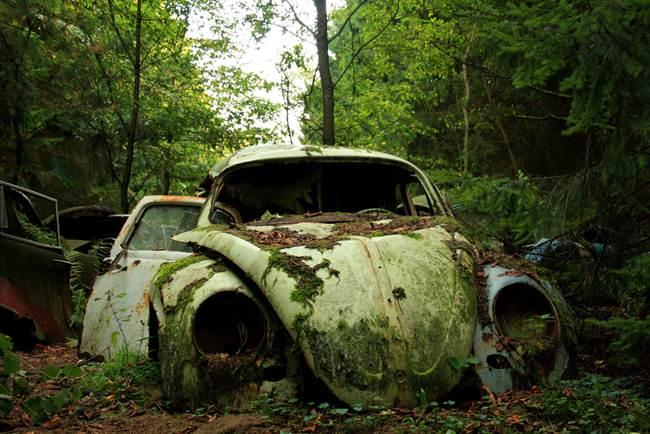 18_Cars-in-Belgian-forest