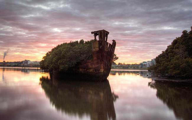 22_The-forest-ship