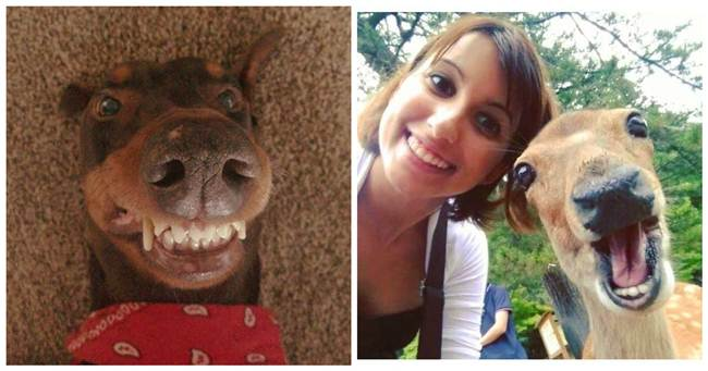 Epic Animals Selfies