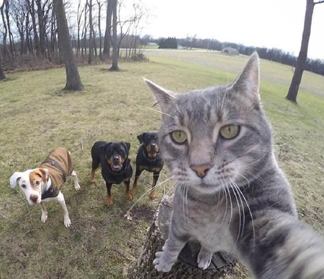 Epic-Animals-Selfies-Picdump-Gudsol-002