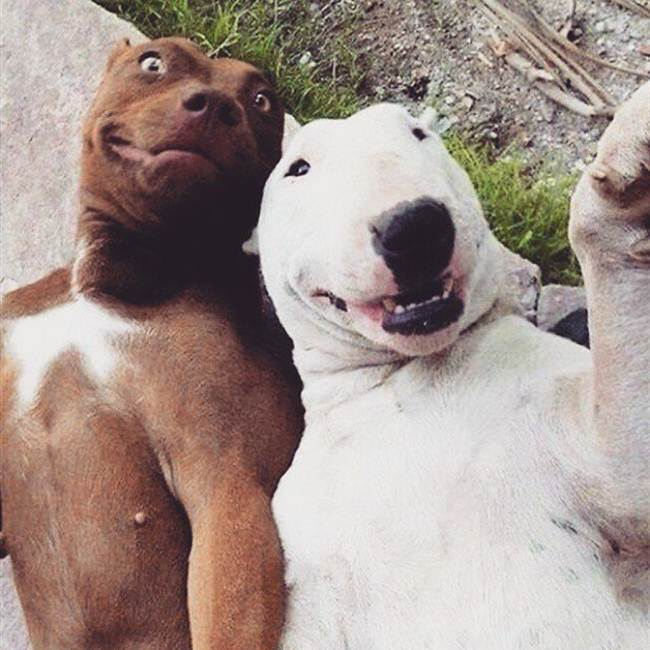 Epic-Animals-Selfies-Picdump-Gudsol-006