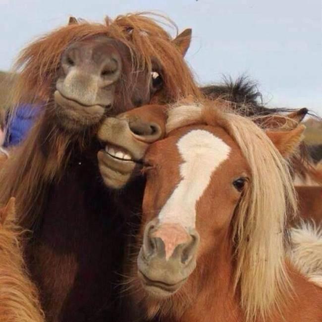 Epic-Animals-Selfies-Picdump-Gudsol-007