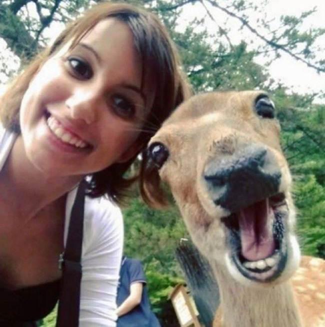 Epic-Animals-Selfies-Picdump-Gudsol-009