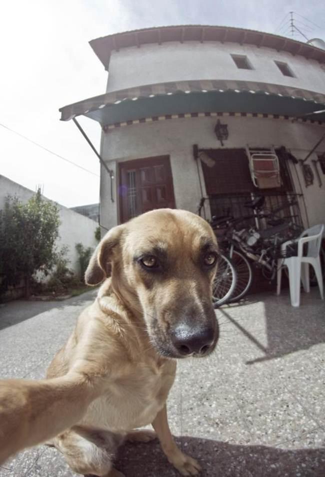 Epic-Animals-Selfies-Picdump-Gudsol-012