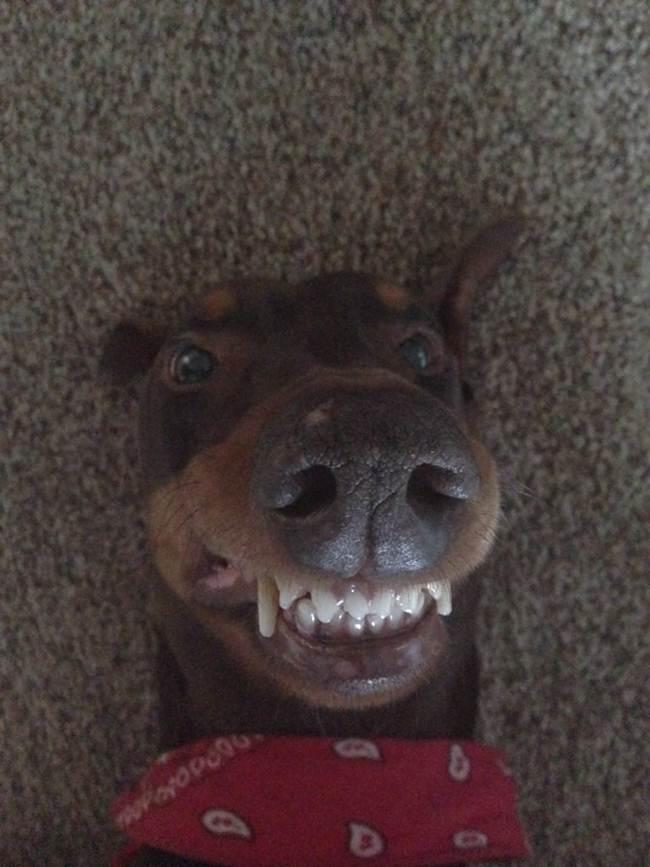 Epic-Animals-Selfies-Picdump-Gudsol-013