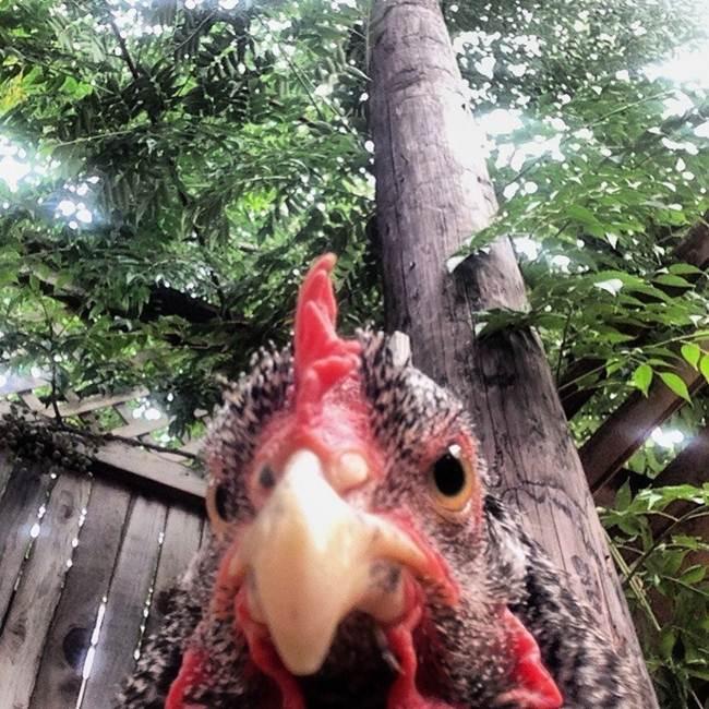 Epic-Animals-Selfies-Picdump-Gudsol-016
