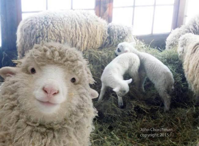 Epic-Animals-Selfies-Picdump-Gudsol-017