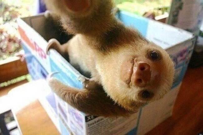 Epic-Animals-Selfies-Picdump-Gudsol-018