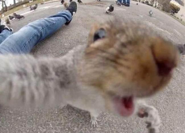 Epic-Animals-Selfies-Picdump-Gudsol-019
