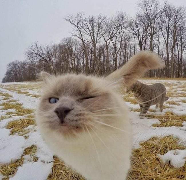 Epic-Animals-Selfies-Picdump-Gudsol-020