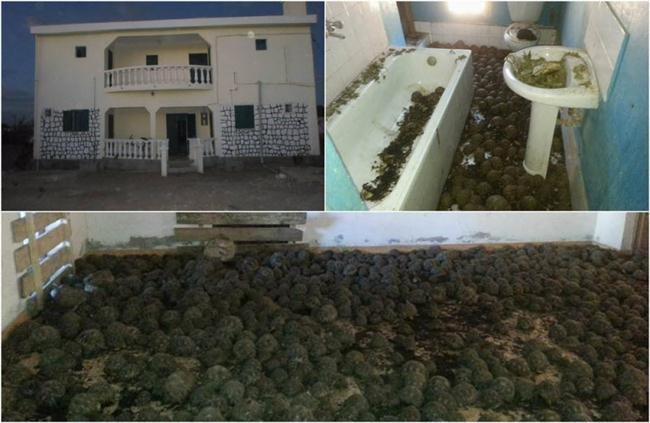 10 K rare turtles found in a two-story house in Madagascar