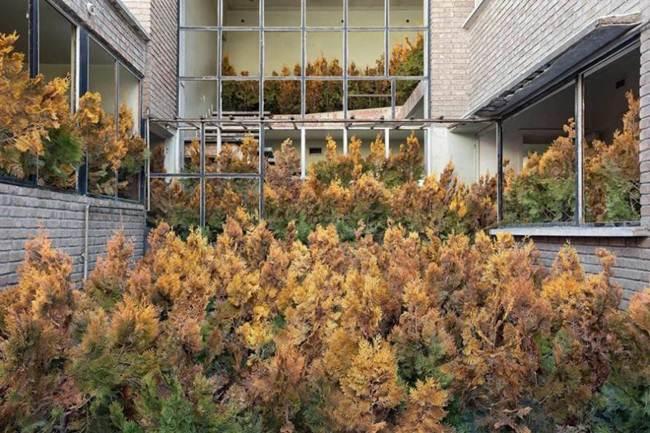 Nature Vegetate in Tehran | Iranian photographer Gohar Dashti