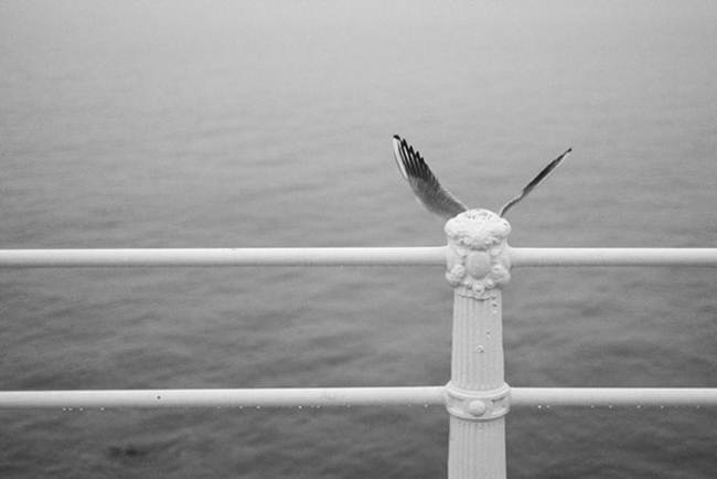 Photographer_Denis-Cherim-015