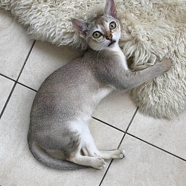 16_Singapore_Cat