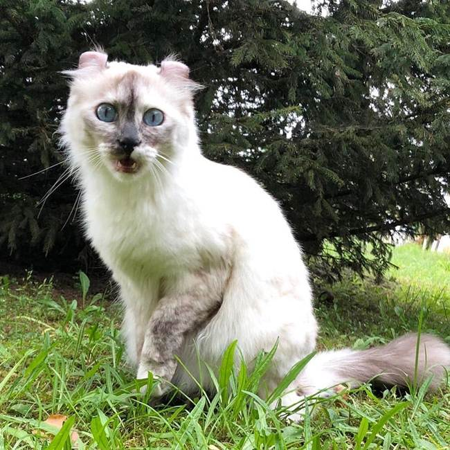 18 Domestic Cats Breeds, Few People know about them, these are also cute and mrmrmr
