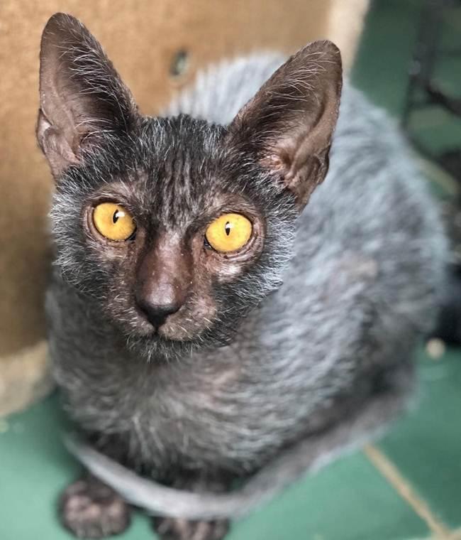 2_Face_Cat